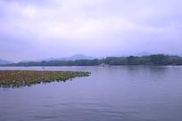 美丽的西湖风光