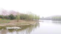 春天湖畔风光