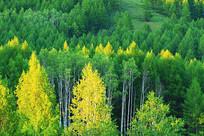 大兴安岭茂密山林景观