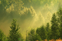 茂密森林雨后雾气阳光