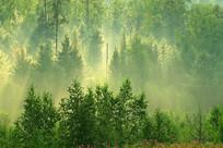 茂密树林雨后雾气阳光