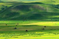 植被繁茂的原野牧场