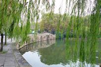 杭州西湖西泠桥垂柳景观