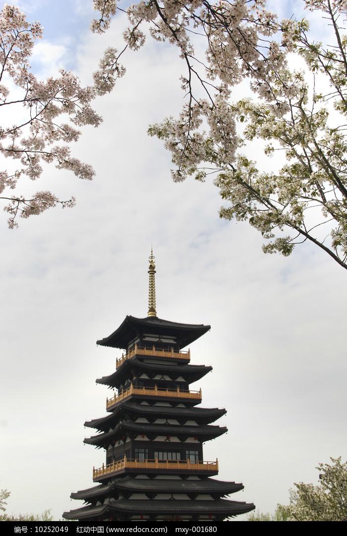 樱花美景图片