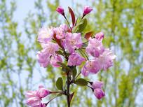 一支高清实拍嫩芽花蕊实拍图