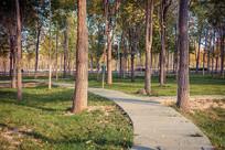 公园小路树木