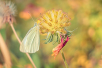 蝴蝶与花朵