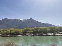 西藏湖泊和沿岸柳树