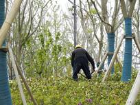 公园种植花草的农民工