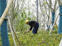 弯腰种植花草的农民工人