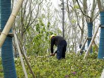种植花草的农民工