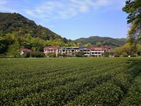 青山茶园农家
