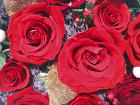 静物红玫瑰