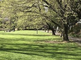 比舍诺的大树和草坪横构图