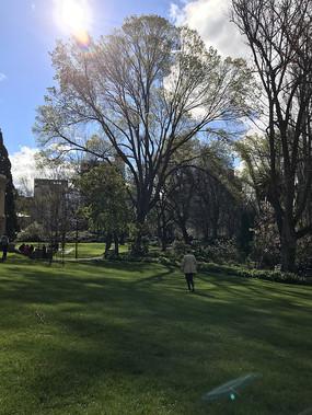 比舍诺的大树和草坪竖构图
