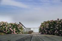 花开海上海景