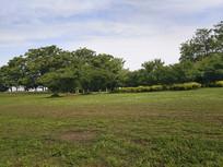 绿地绿荫林