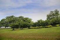 清新绿草地