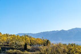 王家大院远处的树木风景