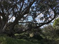 比舍诺海滩大树