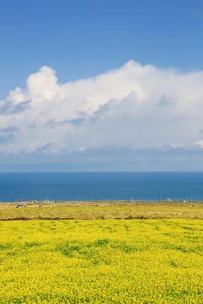 海天一色油菜花开青海湖