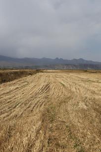 牧场秋草收割后