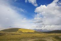 祁连山草地