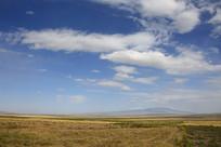 青藏高原一望无际的草场