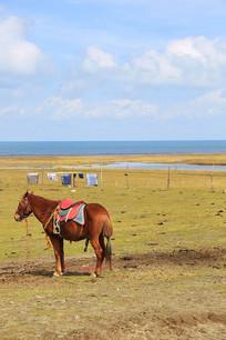 青海湖边枣红马