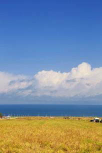 青海湖草场