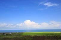 青海湖绿草地背景素材