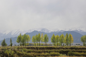 秋收后的祁连山牧场