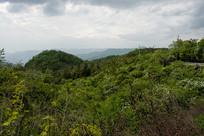 中西部地区重庆巫山森林植被