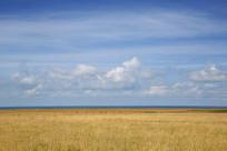 大美蓝天草原
