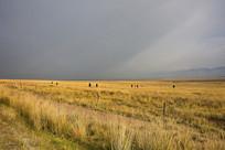 高原草场风景