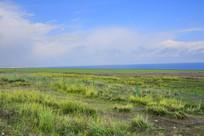 青海湖畔绿色草场