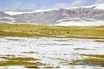 草地雪山牧区