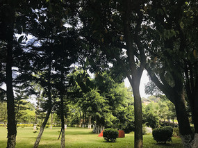 鼓浪屿树木草坪景象
