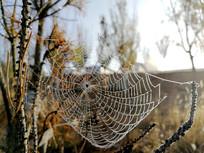 清晨带露水的蜘蛛网