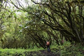 九鼎后山原始森林穿越