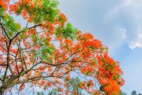 开红花的树木