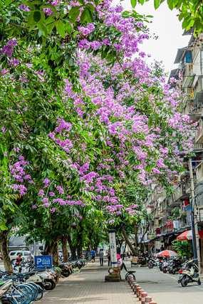 开紫色花朵的树木