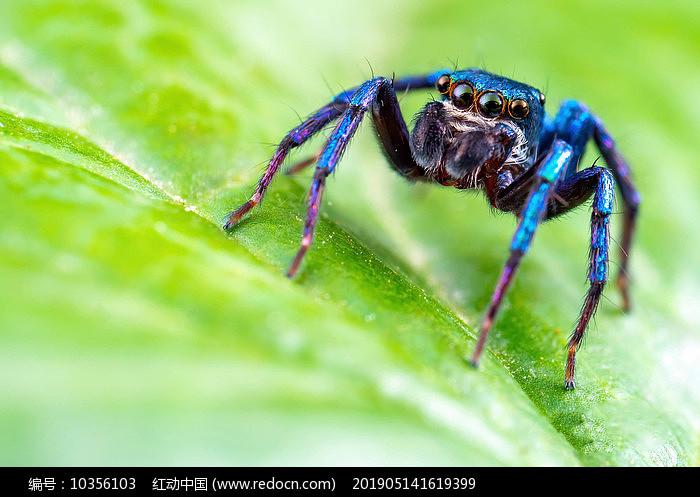 昆虫记录图片