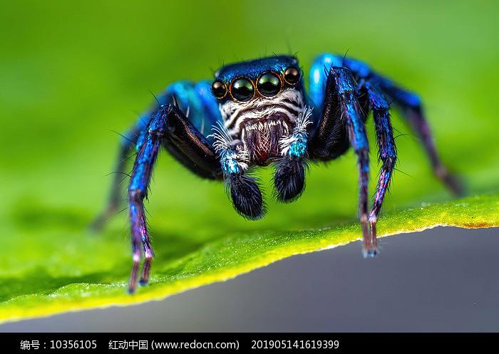百微拍摄昆虫图片