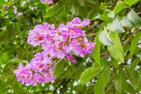 一串紫色花朵