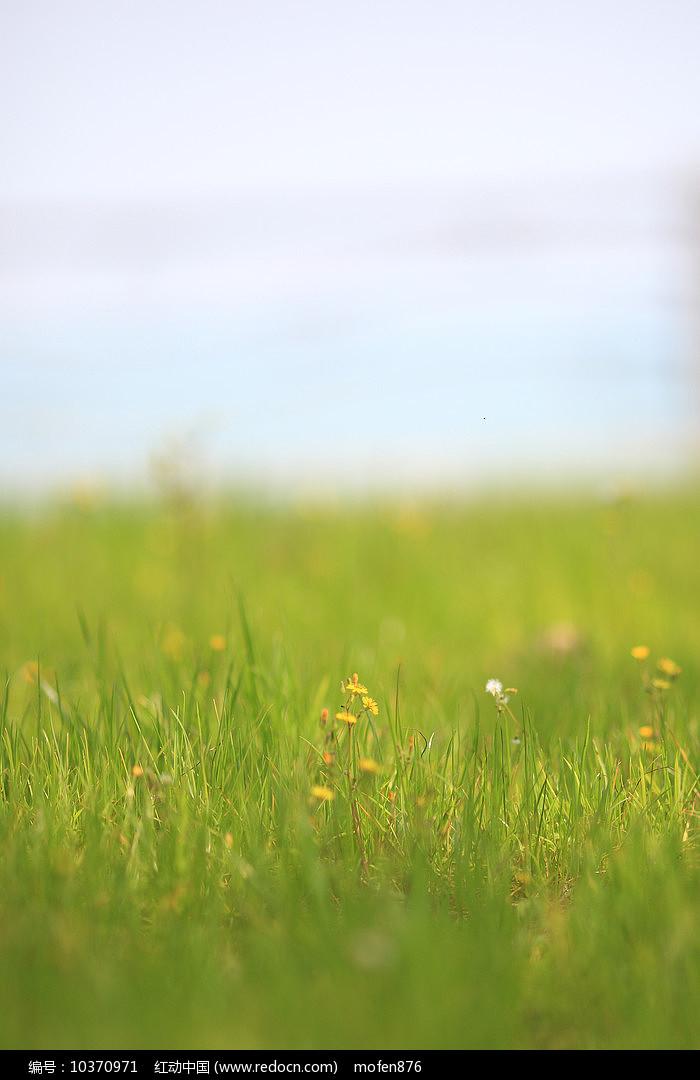 绿色草地图片