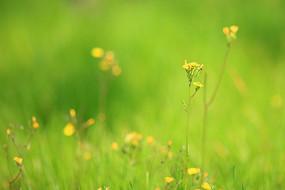 绿色草地素材