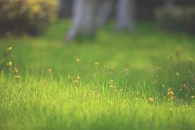 绿色草地背景摄影