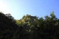 滴水河风光之茂密植被