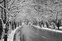 冬季的马路雪景